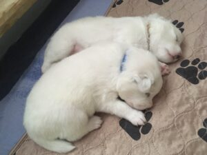 Akito & Anjo