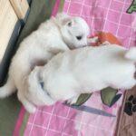 Anjo & Akito