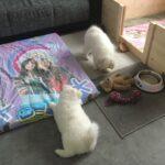 Akito & Allegra