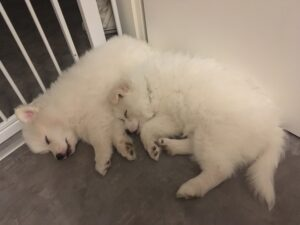 Anjo & Aiko-Dexter